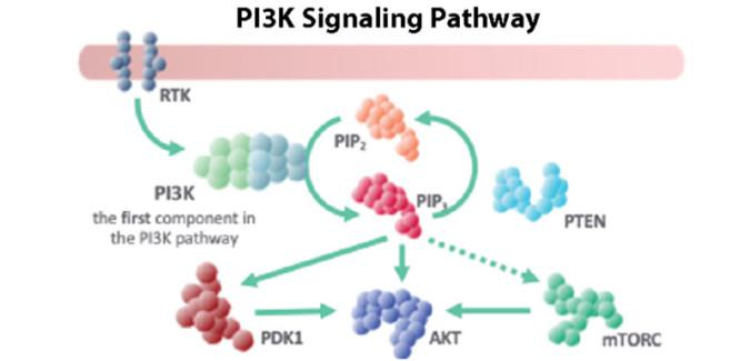 Changing Landscape of Treatment of HR+ and HER2- Metastatic Breast Cancer with PI3K and CDK 4/6 Inhibitors
