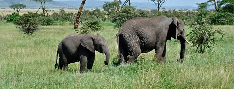 Kilimanjaro CME Climb and Safari